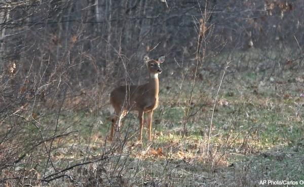 generic deer hunting AP 050615_204395