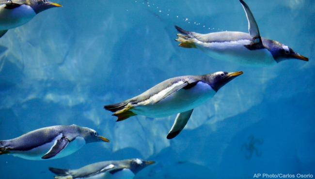 Detroit Zoo Polk Penguin Conservation Center 041316 3_206508