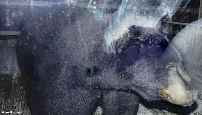 Stevensville bear sighting 032916_202957