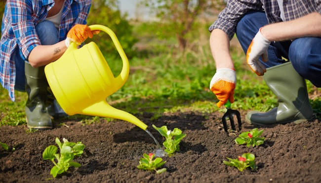 Image of couple of farmers seedling and watering sprouts in the garden_41319