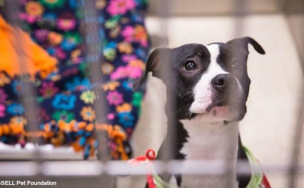 generic dog up for adoption_234096