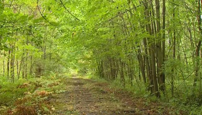 sheridan-road-muskegon-township-jessica-hereringa-search-092116_246576