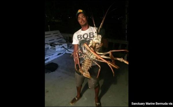 big-lobster-hurricane-nicole-bermuda-ap-101916_254321
