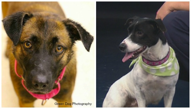 kcas-pets-of-the-week-nena-and-delilah_255015