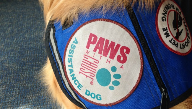 paws-with-a-cause-vest generic 120516_265713