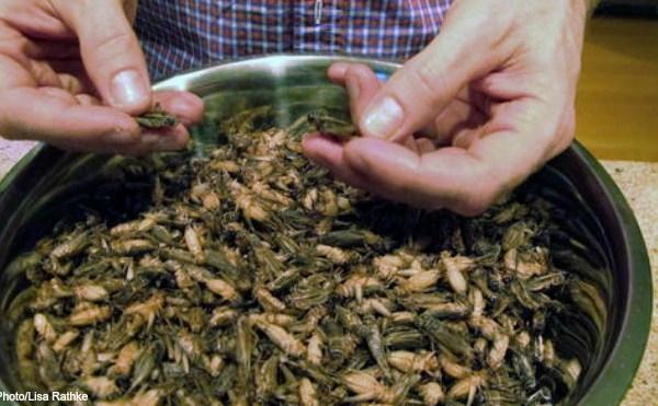 crickets AP 011317_274809