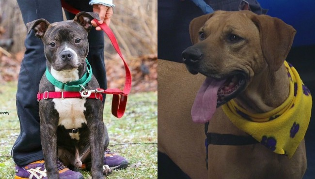 pets-of-the-week-021717_292378