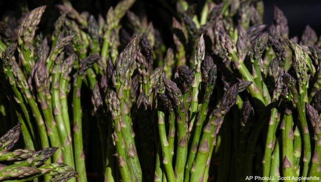 generic asparagus 2_335536