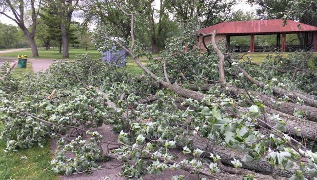 Riverside Park fallen tree 051817_339816