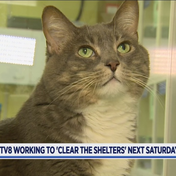 Clear Shelters 1_385422