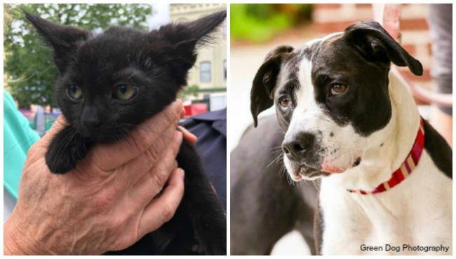 Vito and Jane KCAS pets of the week 081817_387752