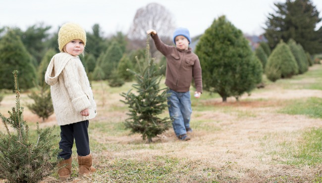 Christmas Tree Farm featured_62409