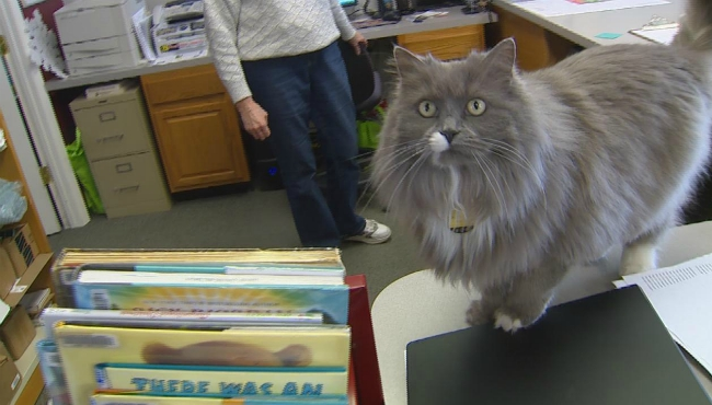 lyons library cat 010818_457677