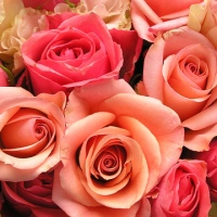 roses-flowers-valentines-day_1517879321399_340223_ver1-0_33247436_ver1-0_640_360_473171