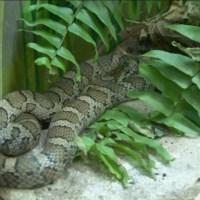 snake_1521477667495.jpg