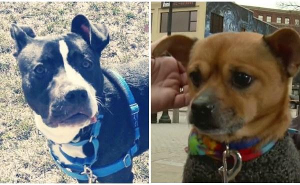 KCAS Pets of the Week Martin and Pugsley 041318_1523644077177.jpg.jpg