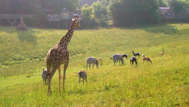 Binder Park Zoo_65014