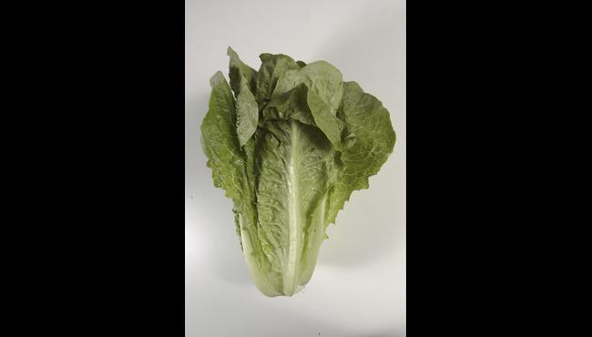 romaine lettuce generic AP_1524477742319.png.jpg