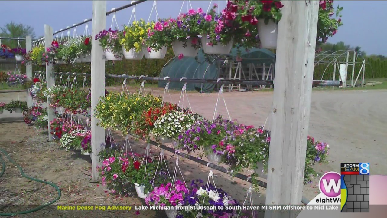 Everything On At West Olive Nursery