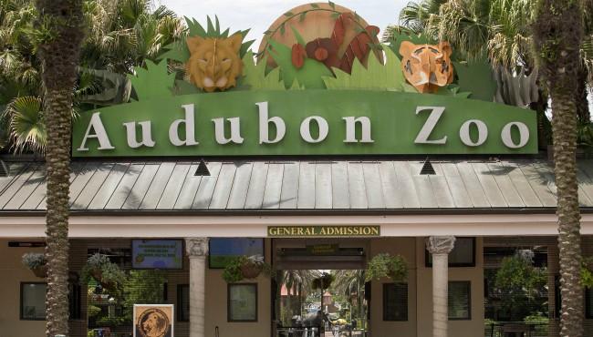 Audubon Zoo AP 071618_1531733263713.jpg.jpg
