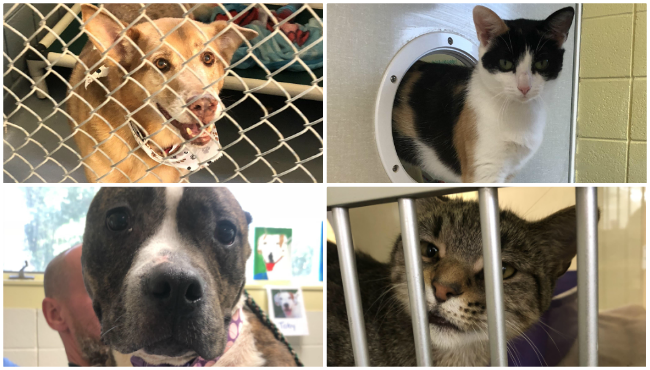 Clear the shelters harbor humane society 081518 _1534517959969.png.jpg