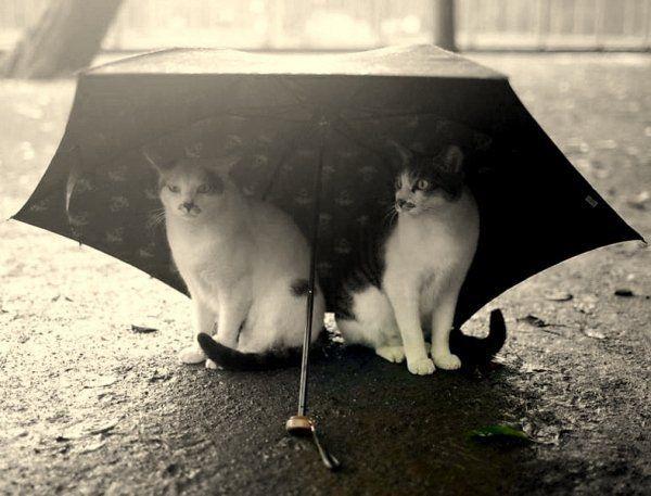 umbrella with cats_1533668714751.jpg.jpg