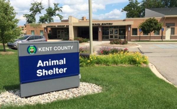 generic kent county animal shelter summer_1523413296822.JPG.jpg