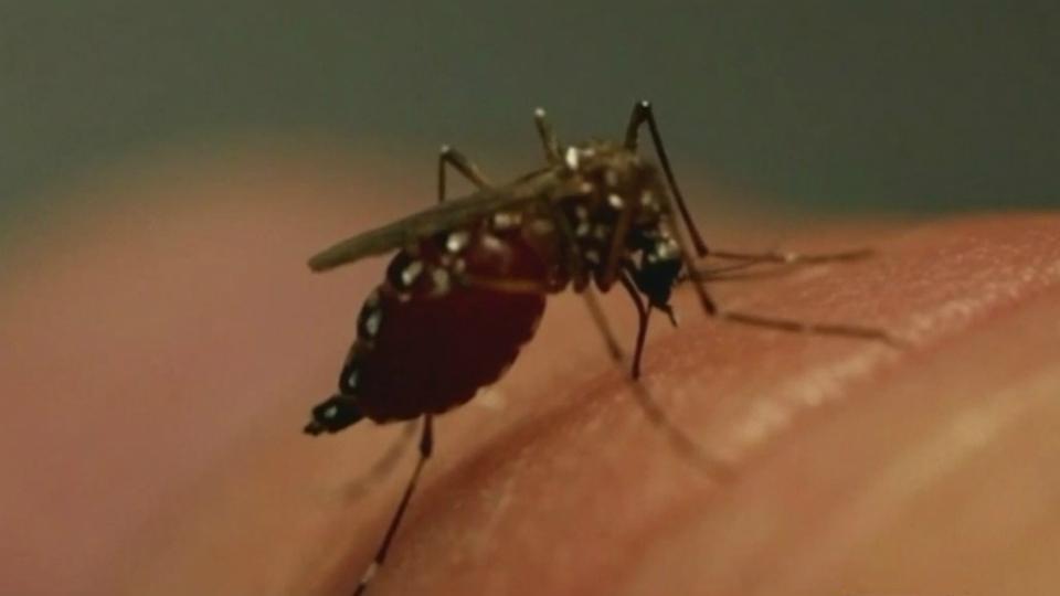generic mosquito_1535405306860.jpg.jpg