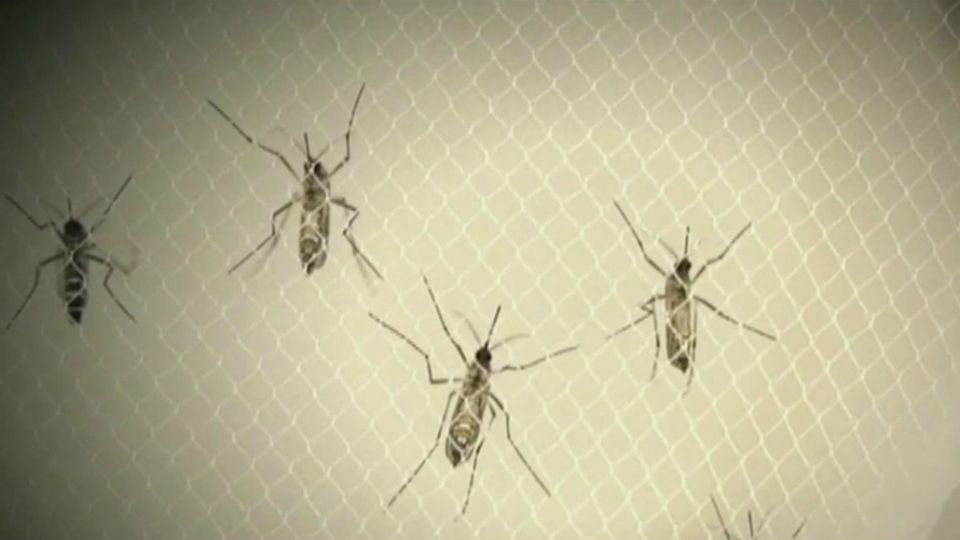 generic mosquitoes_1535405305957.jpg.jpg
