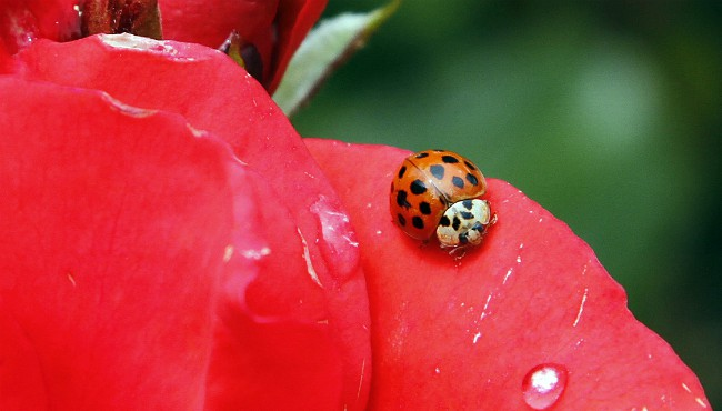 ladybug 092018_1537436639779.jpg.jpg
