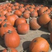 Fall_fun_at_Klackle_Orchards_0_20181023170350