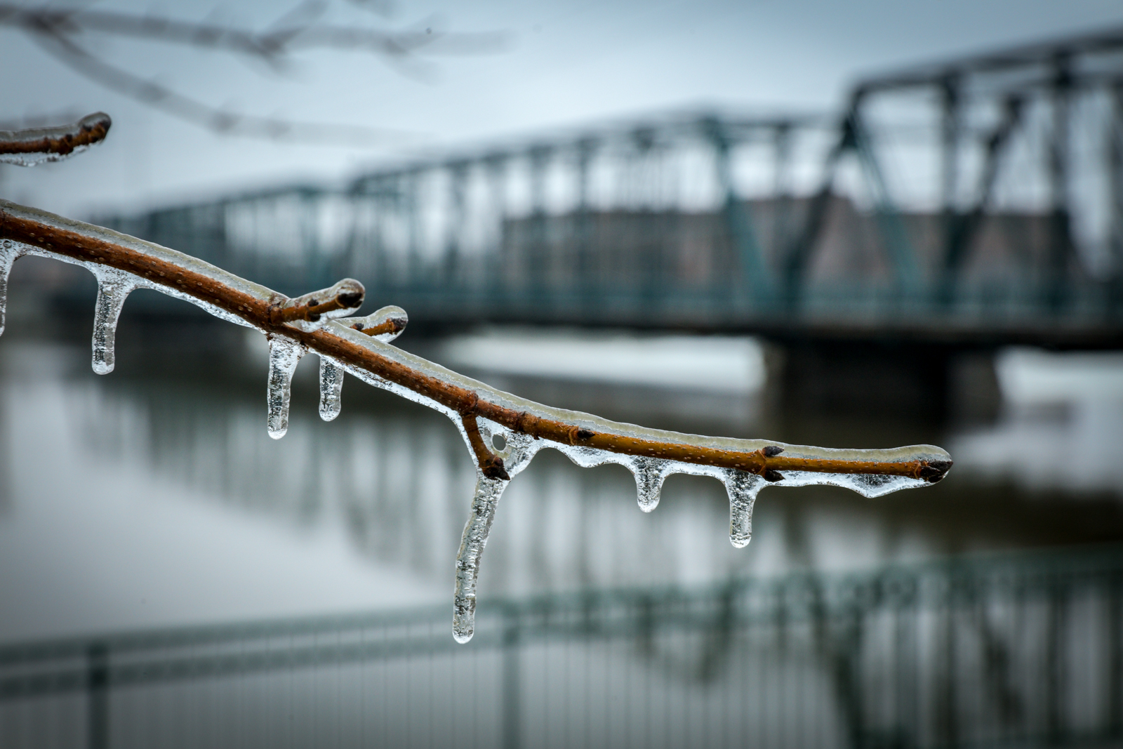 Grand Rapids was iced over after a night of freezing rain and sleet on Feb. 6. 2019. (Michael Buck/WOOD TV8)