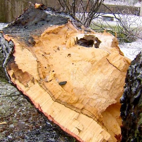 ice storm downed tree 020719_1549583826568.jpg.jpg