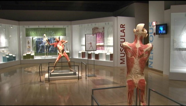 bodies revealed at grand rapids public museum 031419_1552585237751.jpg.jpg
