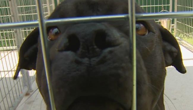 generic dog generic pet adoption_213479