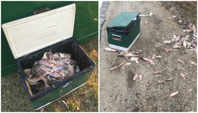 Cedar Creek Township walleye carcasses potential poaching 041119_1555007617634.jpg.jpg