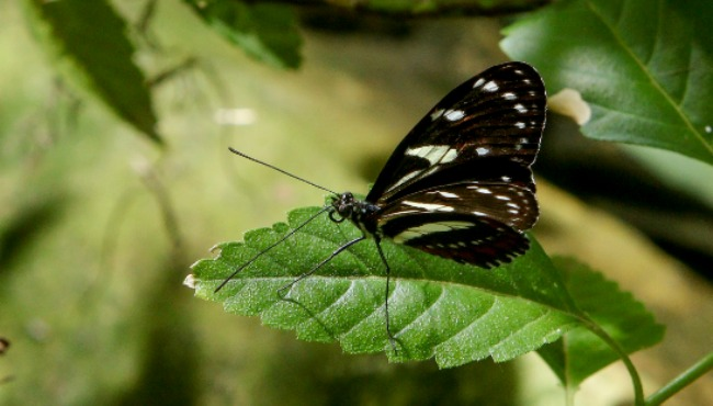 butterfly 2_1554489593270.png.jpg