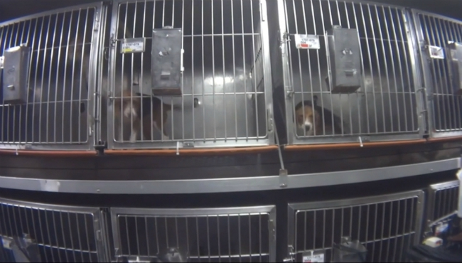 mattawan charles river laboratories dogs 031219_1552426507431.jpg.jpg