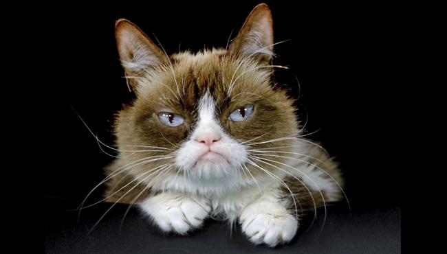 Grumpy Cat AP 051719_1558092676279.png.jpg