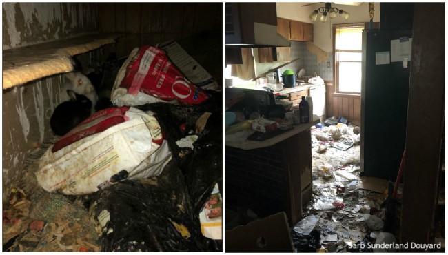 Debris, rabbits in Catherine Avenue home