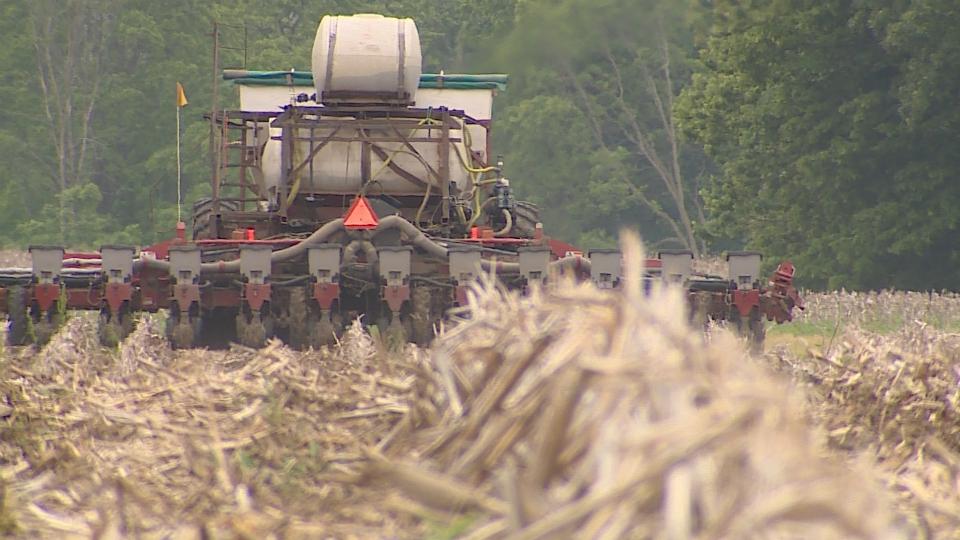 Lowell Township corn field