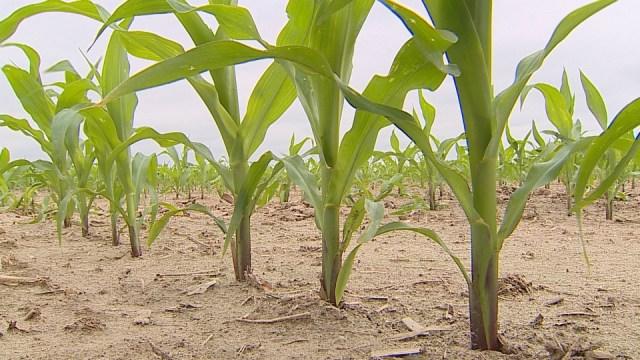 Farmers explain 2019 challenges to lawmakers
