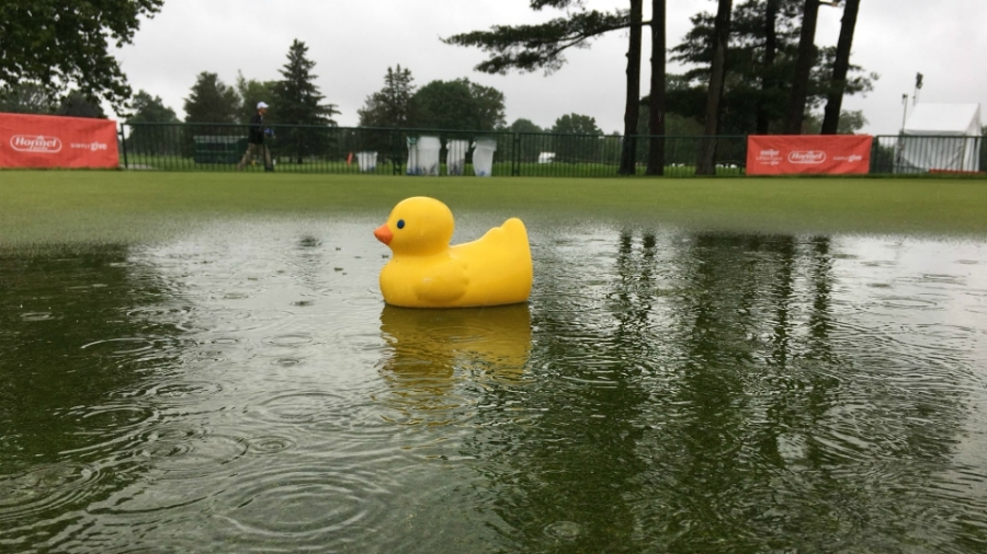 A duck on the soggy Blythefield Country Club.