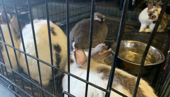 Rescued rabbits at Pound Buddies