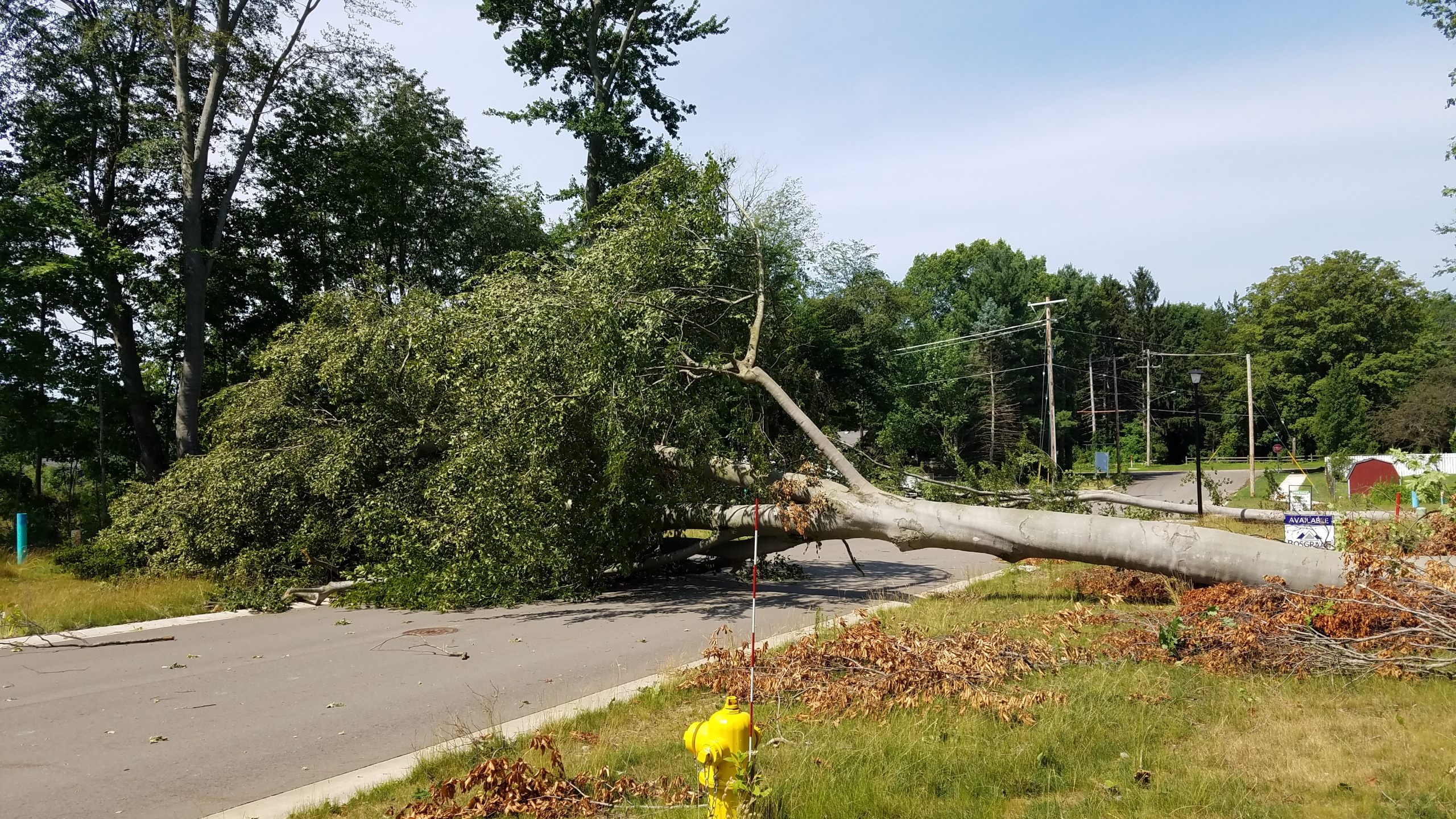 A photo of a fallen tree on Lynn Drive and 60th Street in Allendale on July 20, 2019. (Courtesy of Nicholas Rogers)