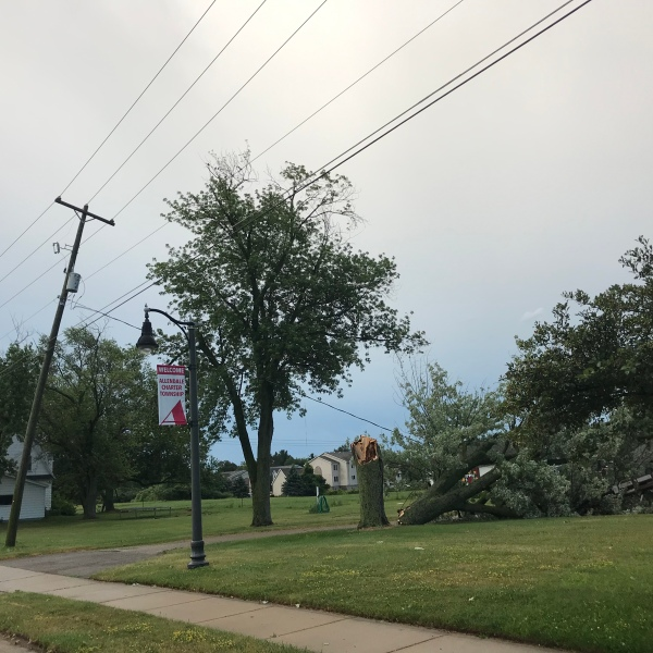 Fallen trees that have partially taken down power lines in Allendale Township. Courtesy of Sean McManus.
