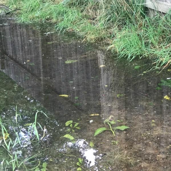 grand rapids backyard pond