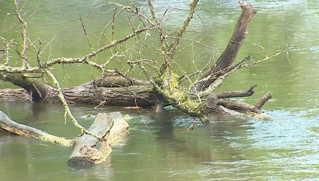 downed tree in Kalamazoo river