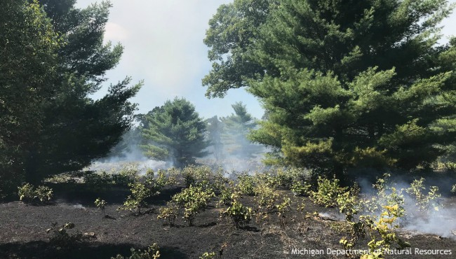 smoke and fire in natural area