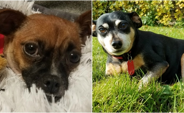 To celebrate National Dog Day, News 8 staffers shared photos of their canines. Above is a photo of Director of Operations Kevin Ferrara's dogs, Lucy and Monty.